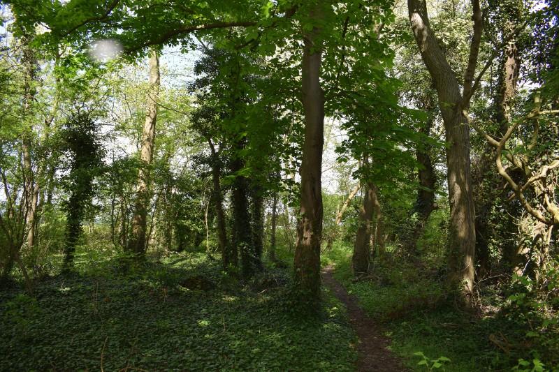 Wood & path (4)