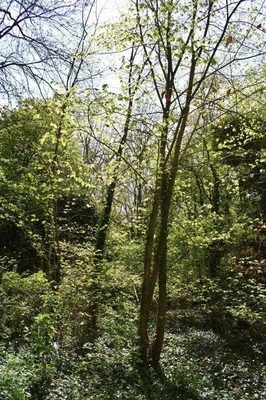 Wood & path (3)