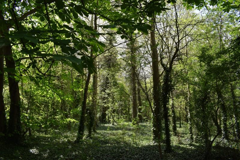 Wood & path (5)