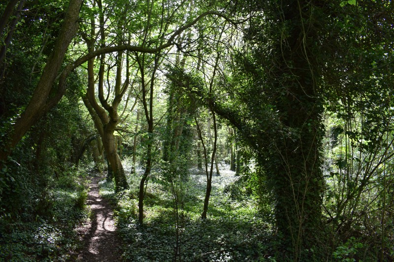 Wood & path (2)
