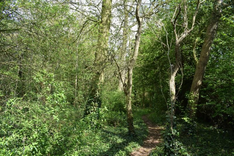 Wood & path (1)