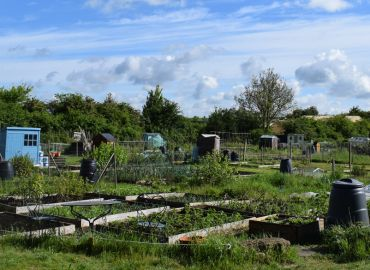 Explore Oakley - Allotments